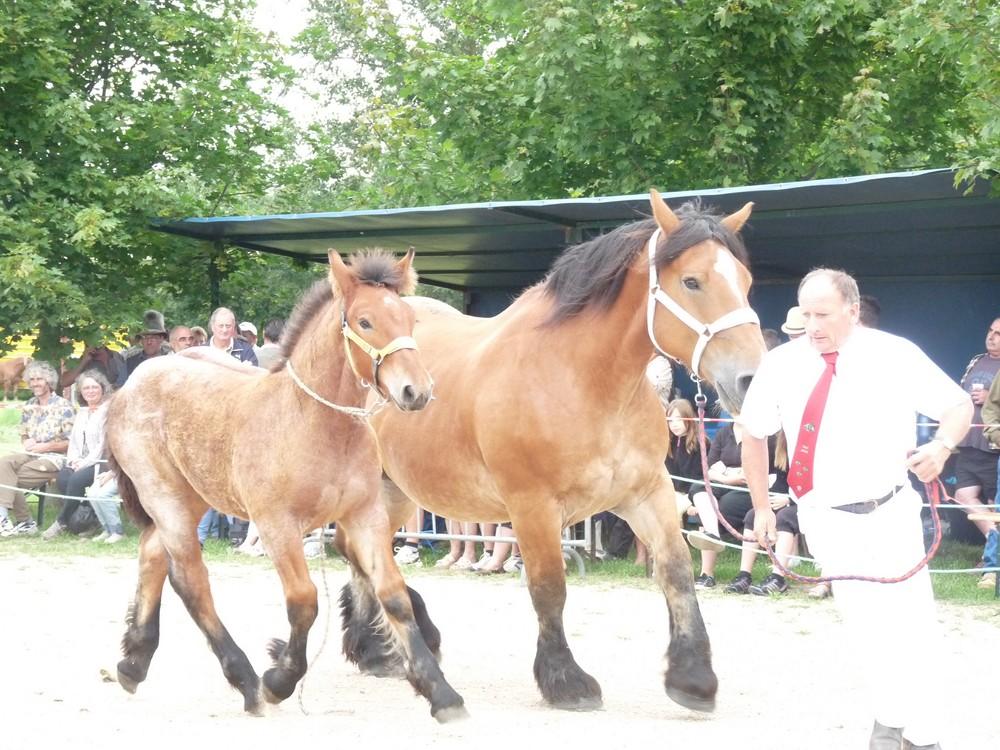 concours chevaux de trait Lalheue 2018
